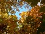 automne Wheeler feuilles